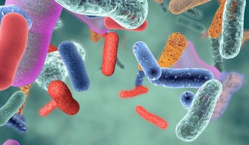 Probiotics plus prebiotics increases PCOS weight loss